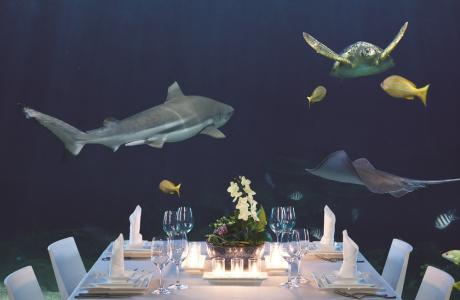 Shark Table